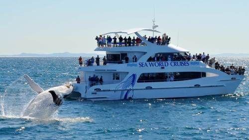 Seaworld whale watching