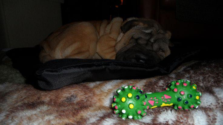 Zoey, sleeping beauty.