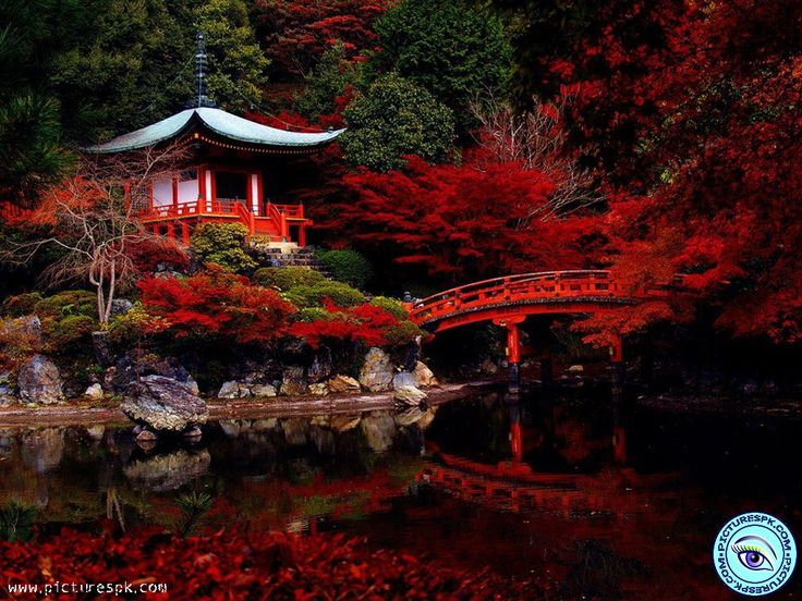 106ab7f1a4757808cbb8c981b87ba08d japanese gardens wanderlust - View Beautiful Red Nature Picture Wallpaper in 1024x768 Resolution