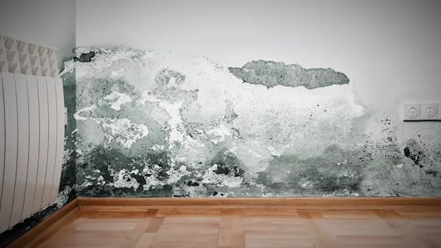 Como Eliminar La Salitre De Las Paredes Y Solucionar Problemas De Humedad Por Capilaridad Y Las Manchas De Salitre En Las Humedad Casa Pared Interiores De Casa