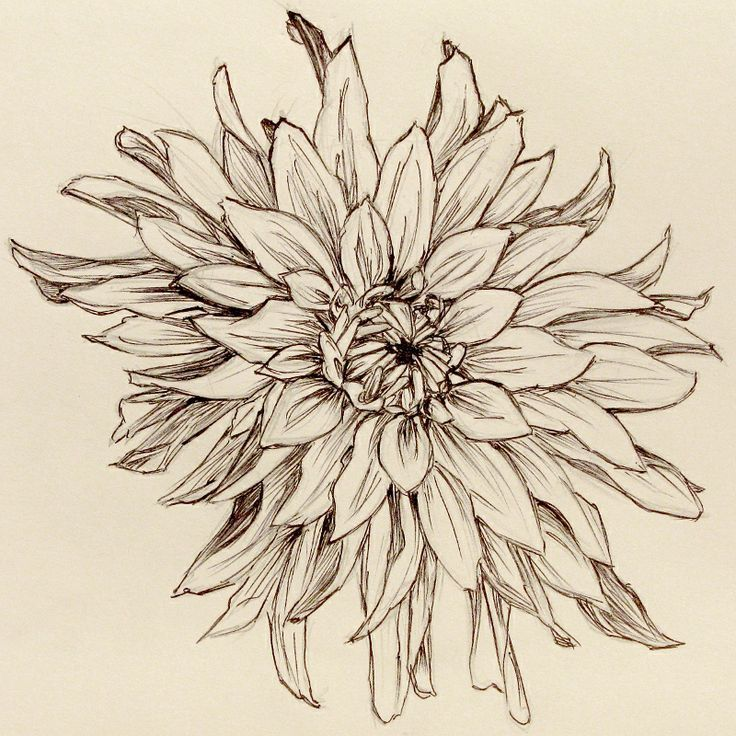 Flower Drawings: Click On Image For Larger Version. (I