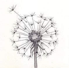 line drawing dandelion | Go Back > Pics For > Cute Pencil Drawings Tumblr::