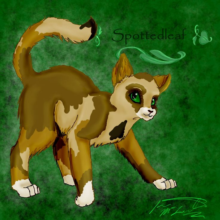 Warriors Erin Hunter Wallpaper: 20 Best Images About My Fave Warrior Cat Spottedleaf On