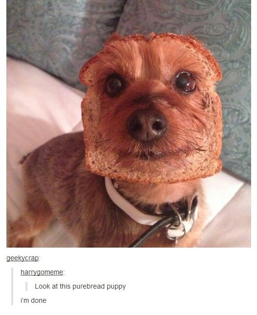 Tumblr Posts. Should I put this on my animal board or my food board? Please help.