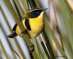 aves chilenas - Buscar con Google