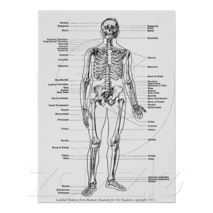 45 best aur l squelette images on pinterest skeleton brooklyn apartment and euro. Black Bedroom Furniture Sets. Home Design Ideas