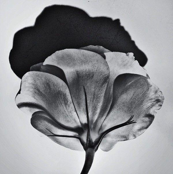482 Best Black As Night White As The Light Images On Pinterest