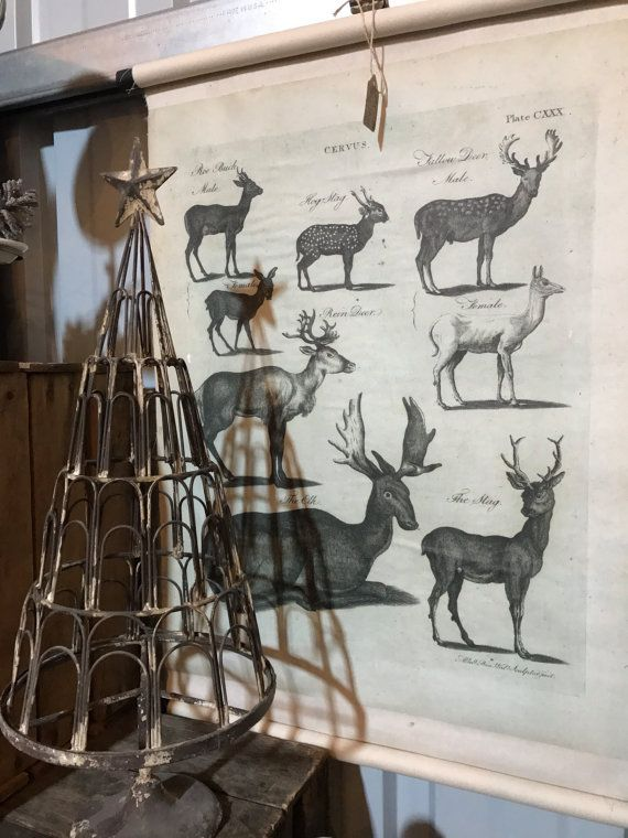 Vintage Style Deer Science Chart by ApothecaryD on Etsy