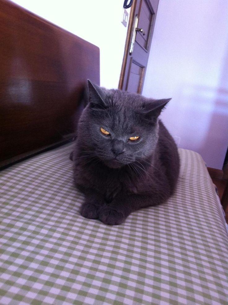 Se você está mal-humorado, então estes gatos estão como você.