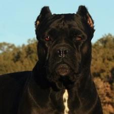 Beautiful breed :)