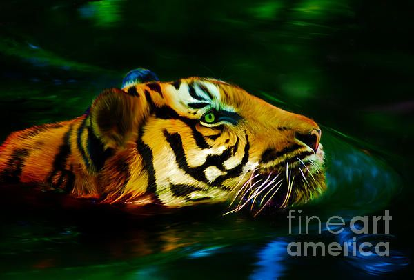 This digital painting shows a tiger going for a refreshing afternoon swim. The artwork shows a close up of the tiger's head.   This digital painting was created by Australian artist Tracey Everington of Tracey Lee Art Designs using Photoshop.