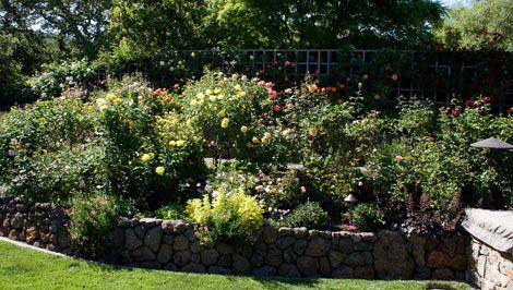 Tiered Rose Garden Garden And Landscape Ideas Pinterest