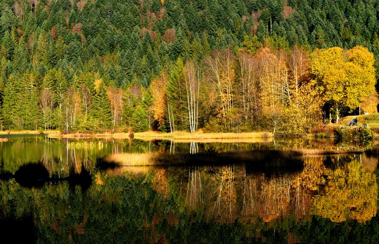 Fall - Les Vosges (88), France - null