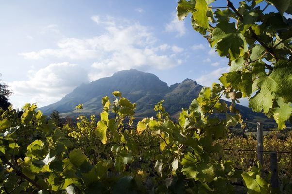 Cape Culinary Safari -  Focusing on all the foods and wine on offer in the stunning Cape region of the country.