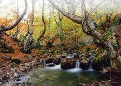 El Faedo destaca entre los bosques más bonitos de España para hacer senderismo - ileon.com