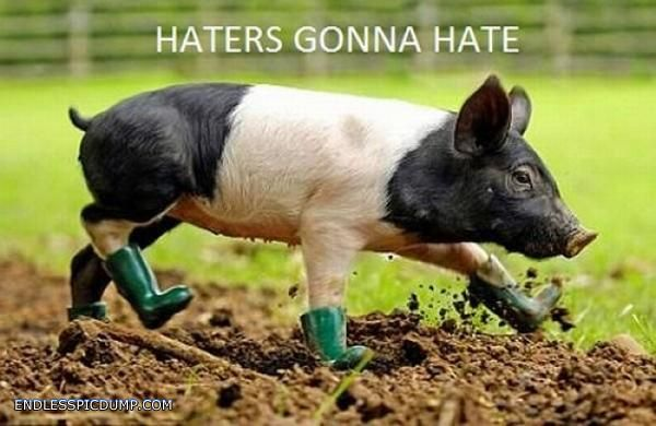 Haters Gonna Hate Pig Click the image for even more on EndlessPicdump.com