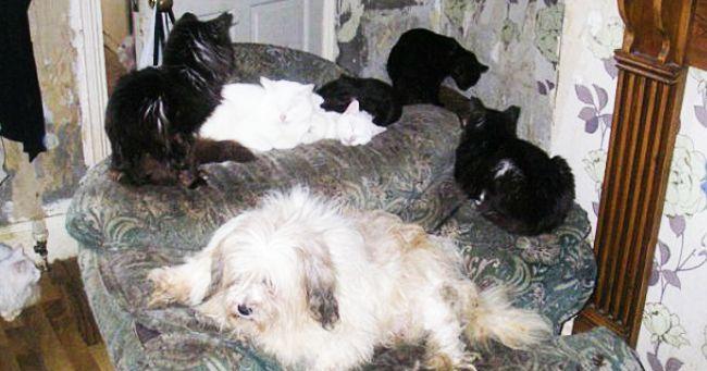 27 cani e gatti rinchiusi in due piccole stanze