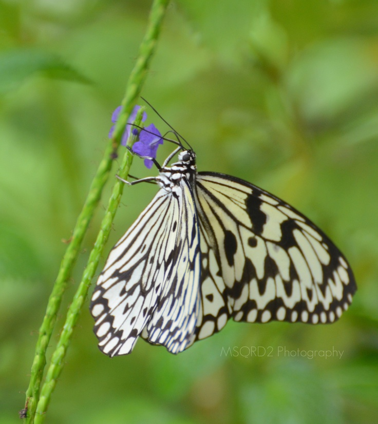 1000 Images About Tucson Botanical Gardens On Pinterest Butterfly Exhibit Tropical And Tucson