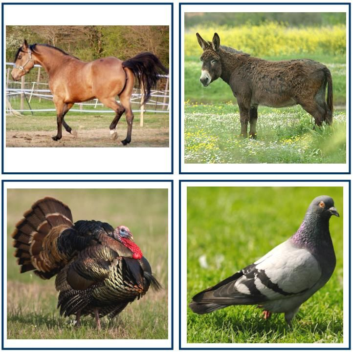 Je souhaite réaliser pour Alexandre toute une série de cartes avec des photos d'animaux. Je trouvecela intéressant comme alternative aux im...