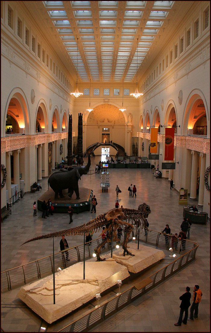 Museum of Natural History, Chicago. MY FAVORITE. Dear, future husband, propose to me on this staircase!