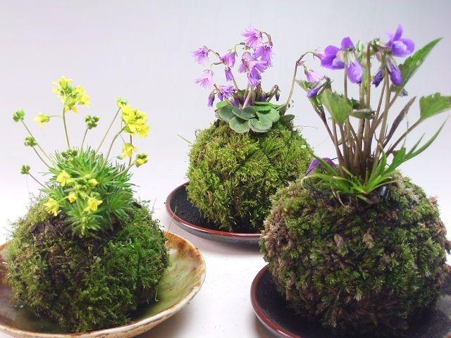 297 best plantes images on Pinterest Plants, Gardening and Botany