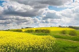 Image result for lincolnshire wolds