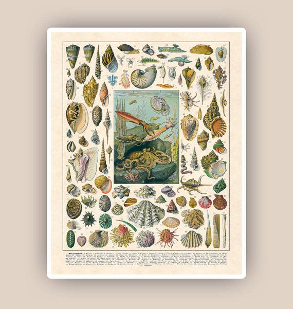 Educational art botanicals posters natural science by PrintLand