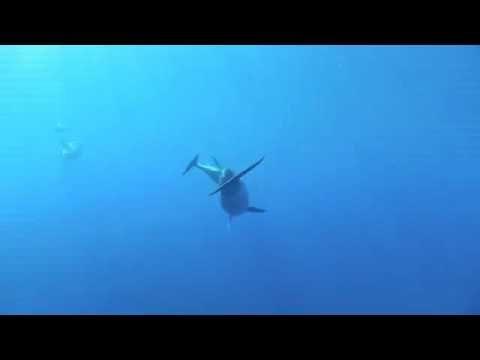 The Dolphins of Portofino.