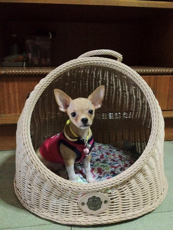 CUTE WICKER PET BED BASKET DOG BED WICKER CAT BASKET CAT BED SYNTHETIC RATTAN
