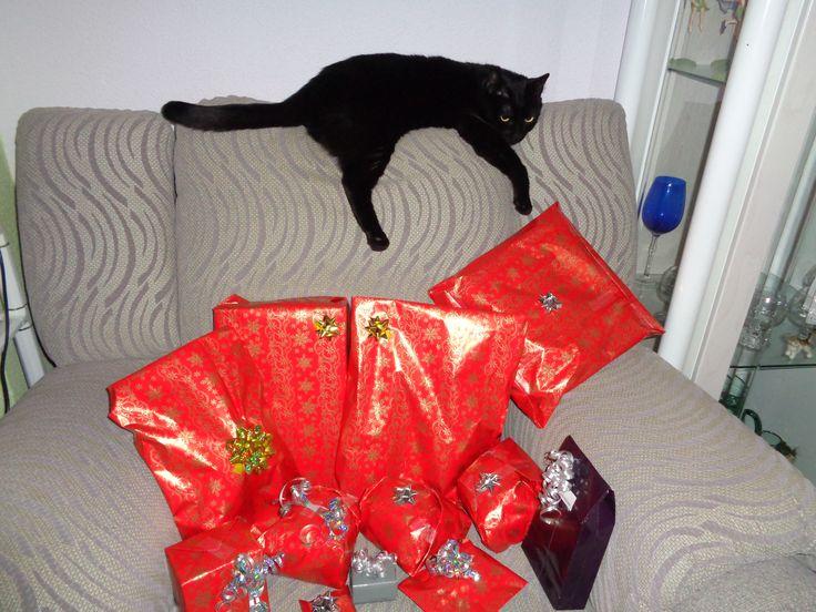 Salem custodiando los regalos