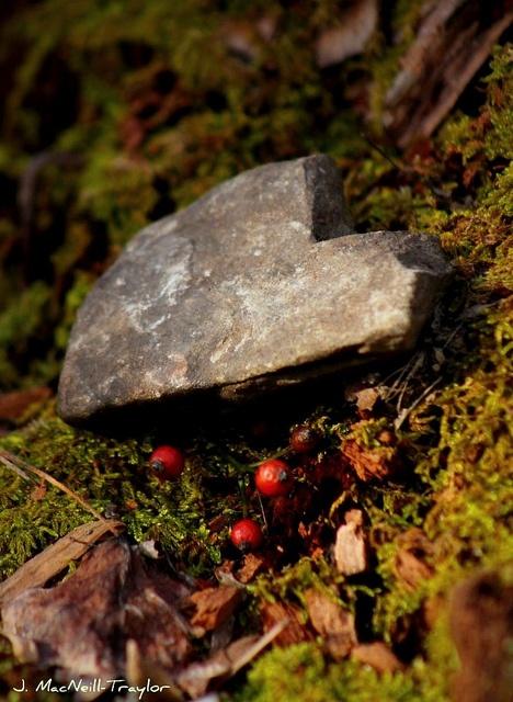 Heart in the forestHeart Stones, Outdoor Ideas, Outstanding Outdoor, Heart Rocks, Unexpected Heart, Shape Rocks, Jennifer Macneil, Heart Shaped Rocks, Macneil Traylor