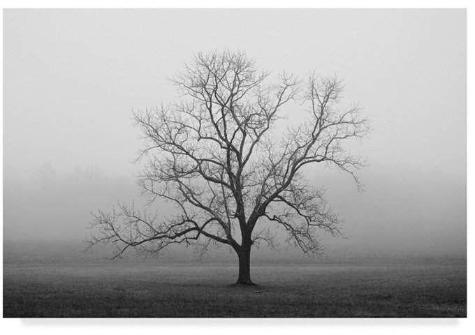 Nicholas Bell Fotografie 'Velvet Sunrise' Leinwandbild – 32 x 22