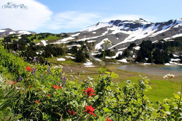 Meadow and Panorama Ridge, Garibaldi Park, Whistler, B.C.