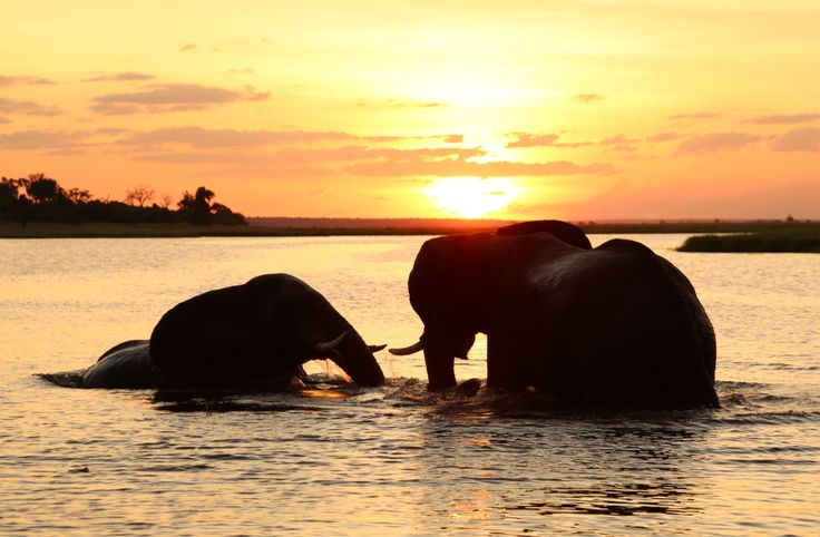 Elephant Sunset- Chobe River, Botswana. Digital Image by CarlyTakesPictures on Etsy