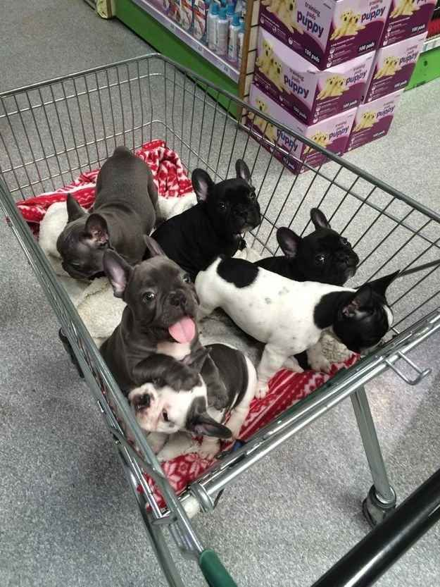 This basket of pups.