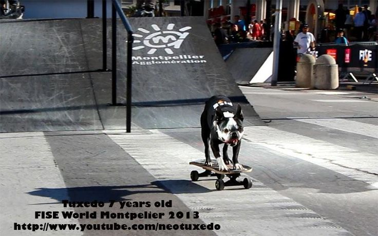 Dogs Skateboarding and Scootering at FISE 2013 - photo 2