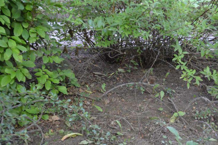 Aj vy si myslíte že lesné huby rastú iba v lese? Že je nemožné si ich dopestovať doma na dvore? Niektorí dobrodruhovia si to nemyslia. Rozhodli sme sa preto ich tvrdenia vyskúšať, aby sme ich následne mohli potvrdiť alebo naopak vyvrátiť. Aj vy poznáte to známe video štúdia Přemka Podlahy, kde veci znalý pán prezentuje …