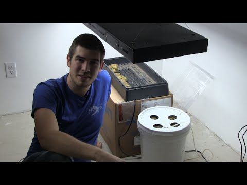 World's Most Simple $5 DIY Hydroponic Setup QUICK EZ & CHEAP - YouTube