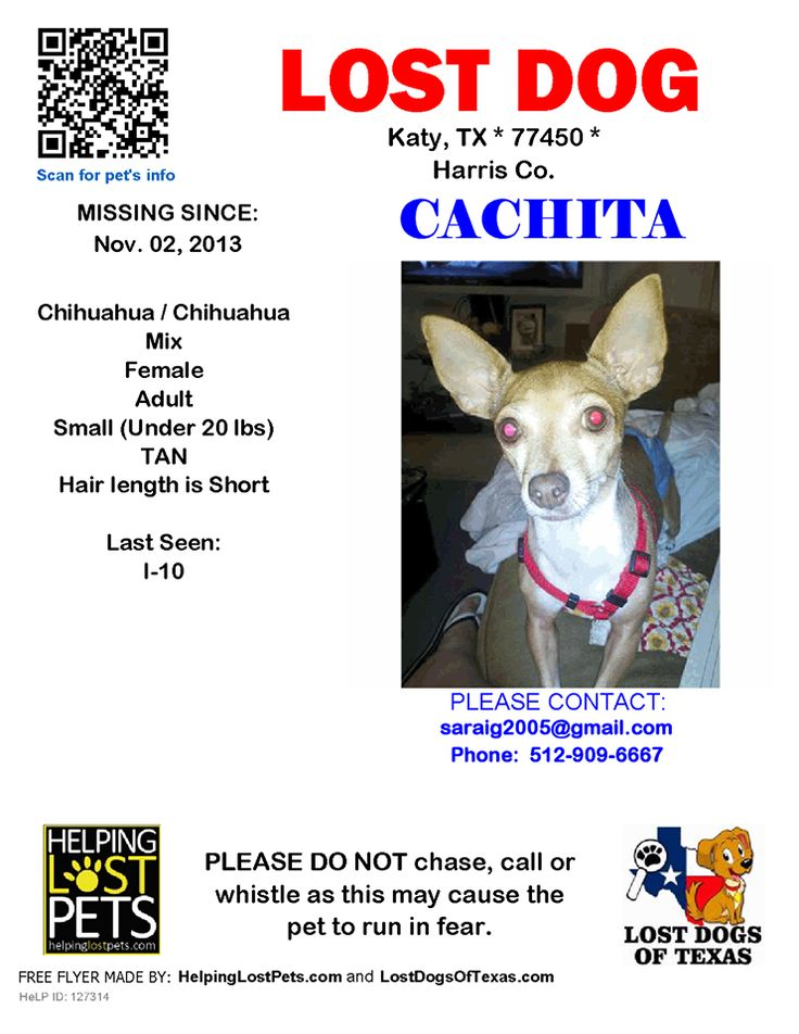 More Info Http Www Helpinglostpets Com Petdetail Id 127314 Losing A Dog Chihuahua Mix Chihuahua