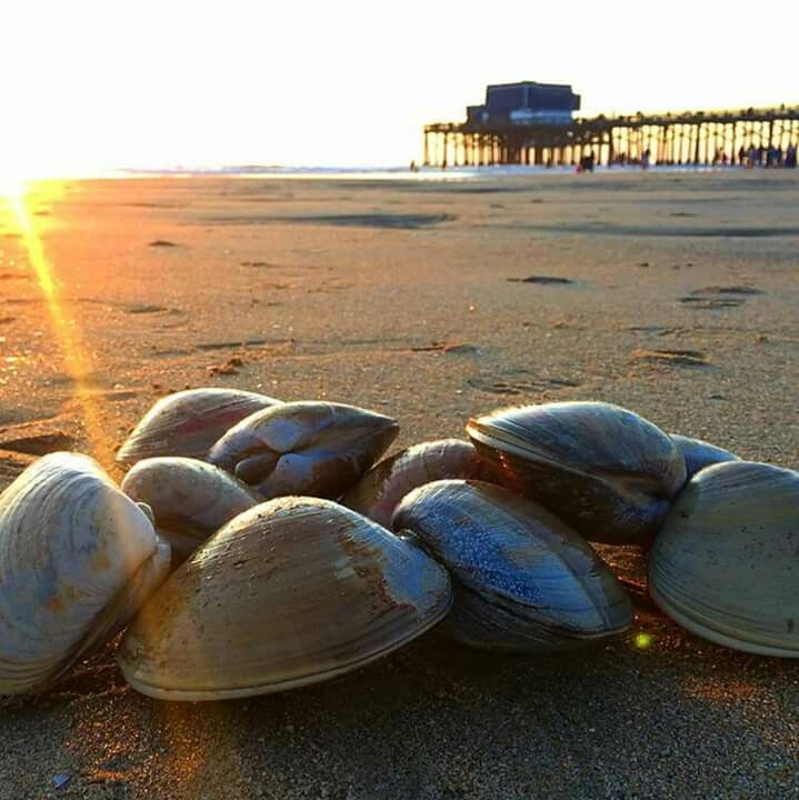 102 best pismo beach images on pinterest pismo beach coast and