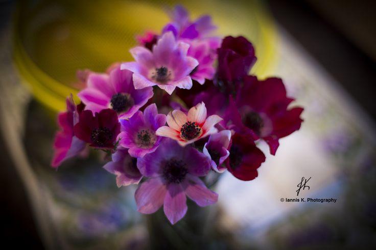 Purple anemone by Iannis Koukoras on 500px
