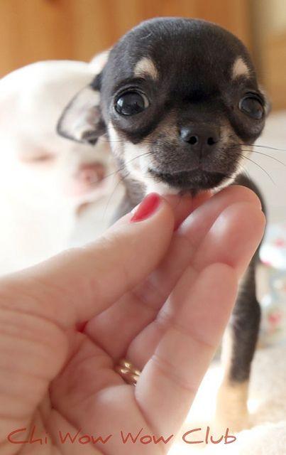 precious lil face