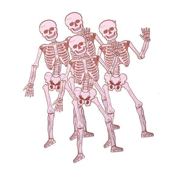 Pack Esqueleto Articulado -> http://www.masterwise.cl/productos/6-ciencias/18-pack-esqueleto-articulado