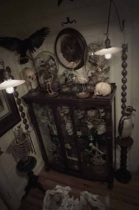 From Daylight And Dark Cabinet Of Curiositiesskeletonsdecor Ideasgothic Home Decorcreepy