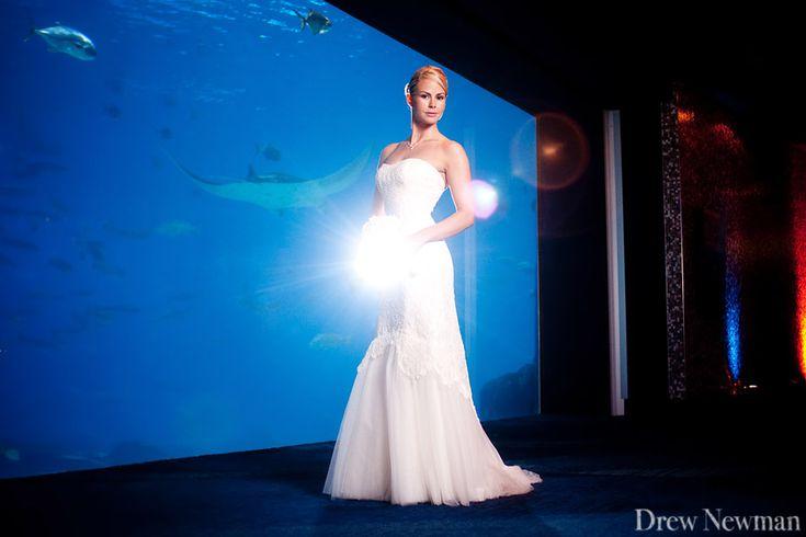 33 best weddings amp engagements at georgia aquarium images