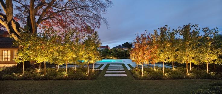 Uplighting on feature trees. Armadale, VIC Australia. Anthony Wyer + Associates www.anthonywyer.com