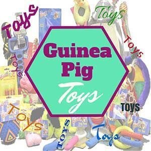 Lots of ideas for homemade guinea pig toys