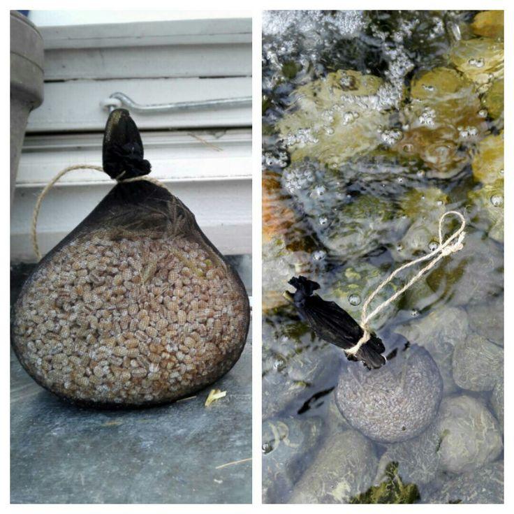 Bygg reduserer algevekst