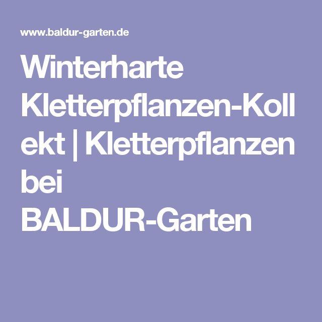 Winterharte Kletterpflanzen-Kollekt | Kletterpflanzen bei BALDUR-Garten