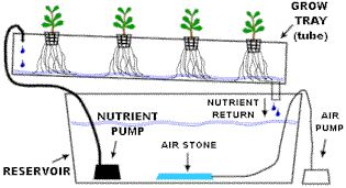 Simple Hydroponic Systems | Nutrient Film Technique)